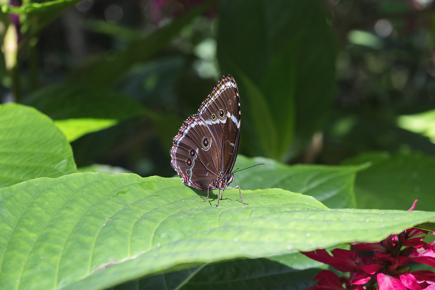 A butterfly perched on a leaf